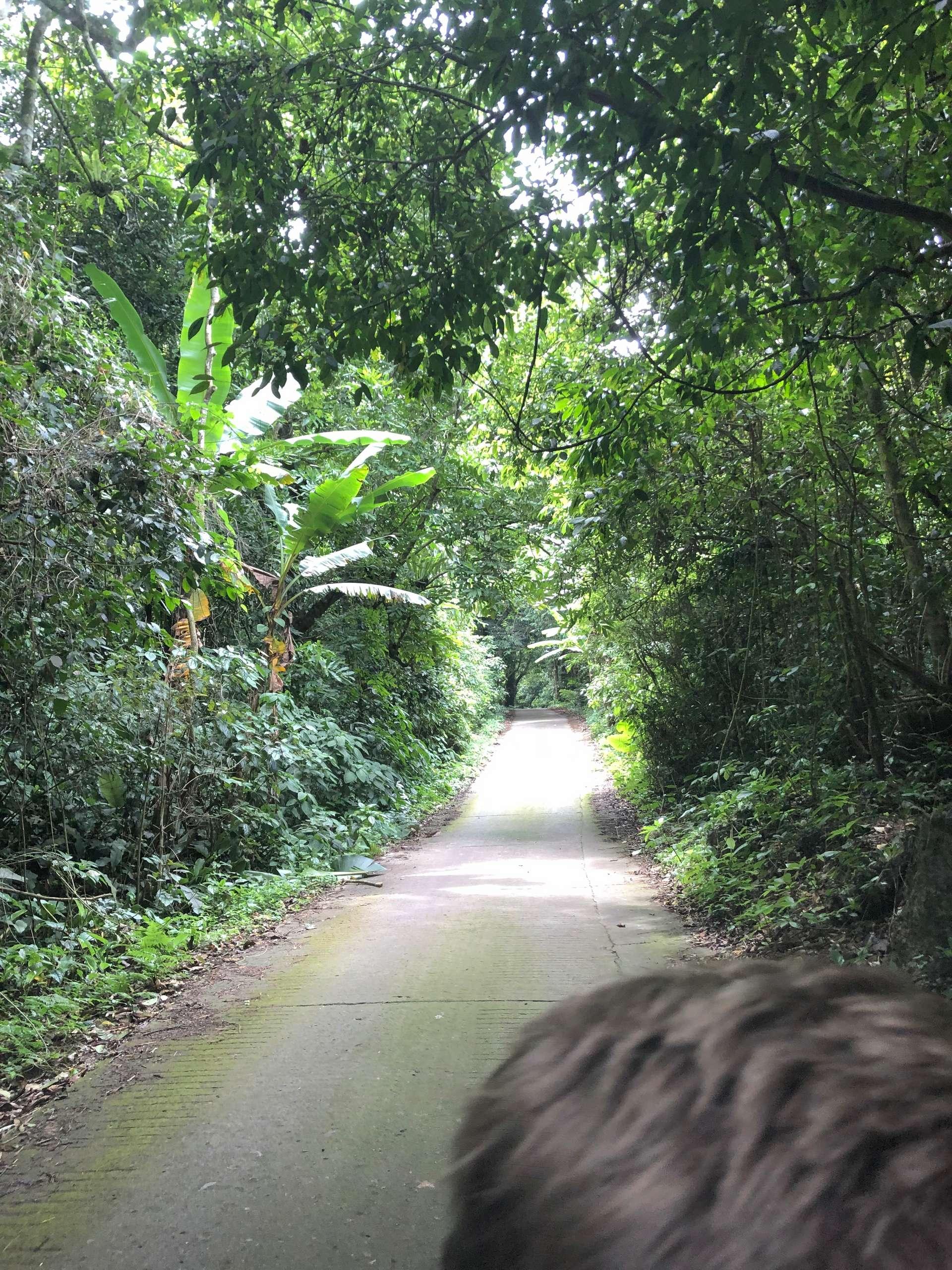 Vietnam, Ninh Binh, jungle