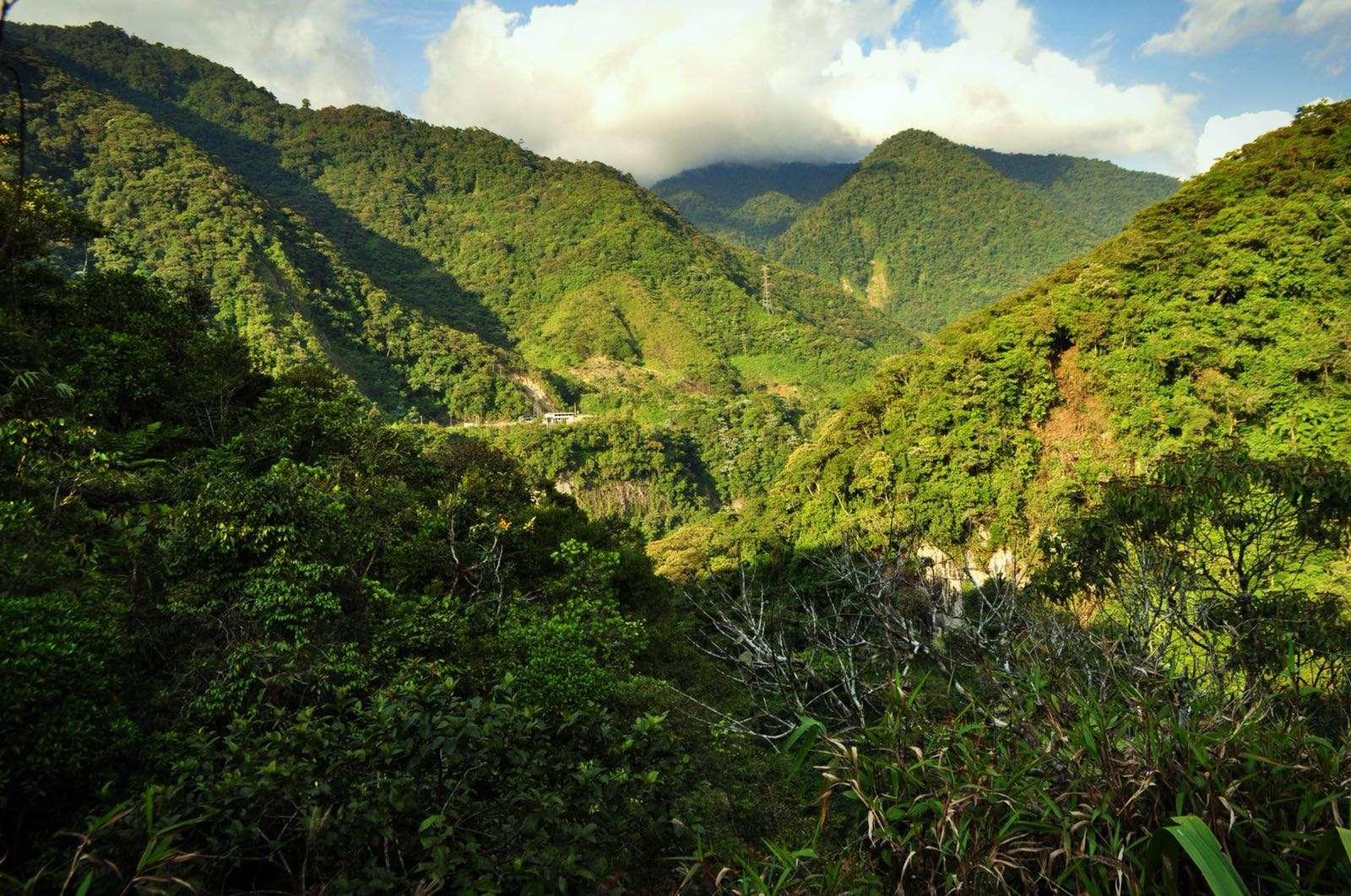 Baños jungle