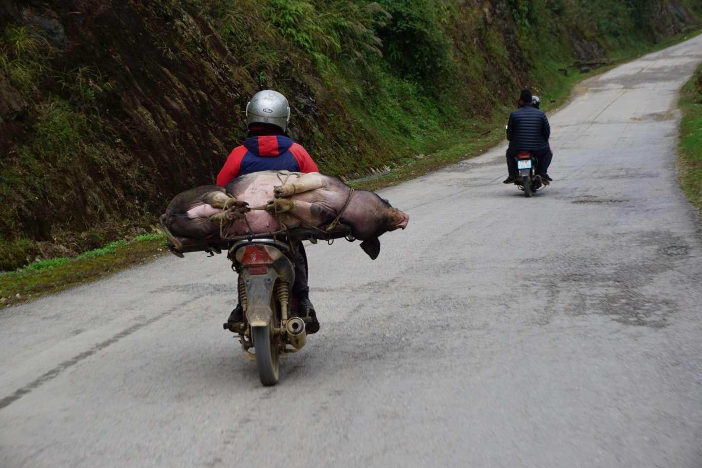 Noord Vietnam, veevervoer