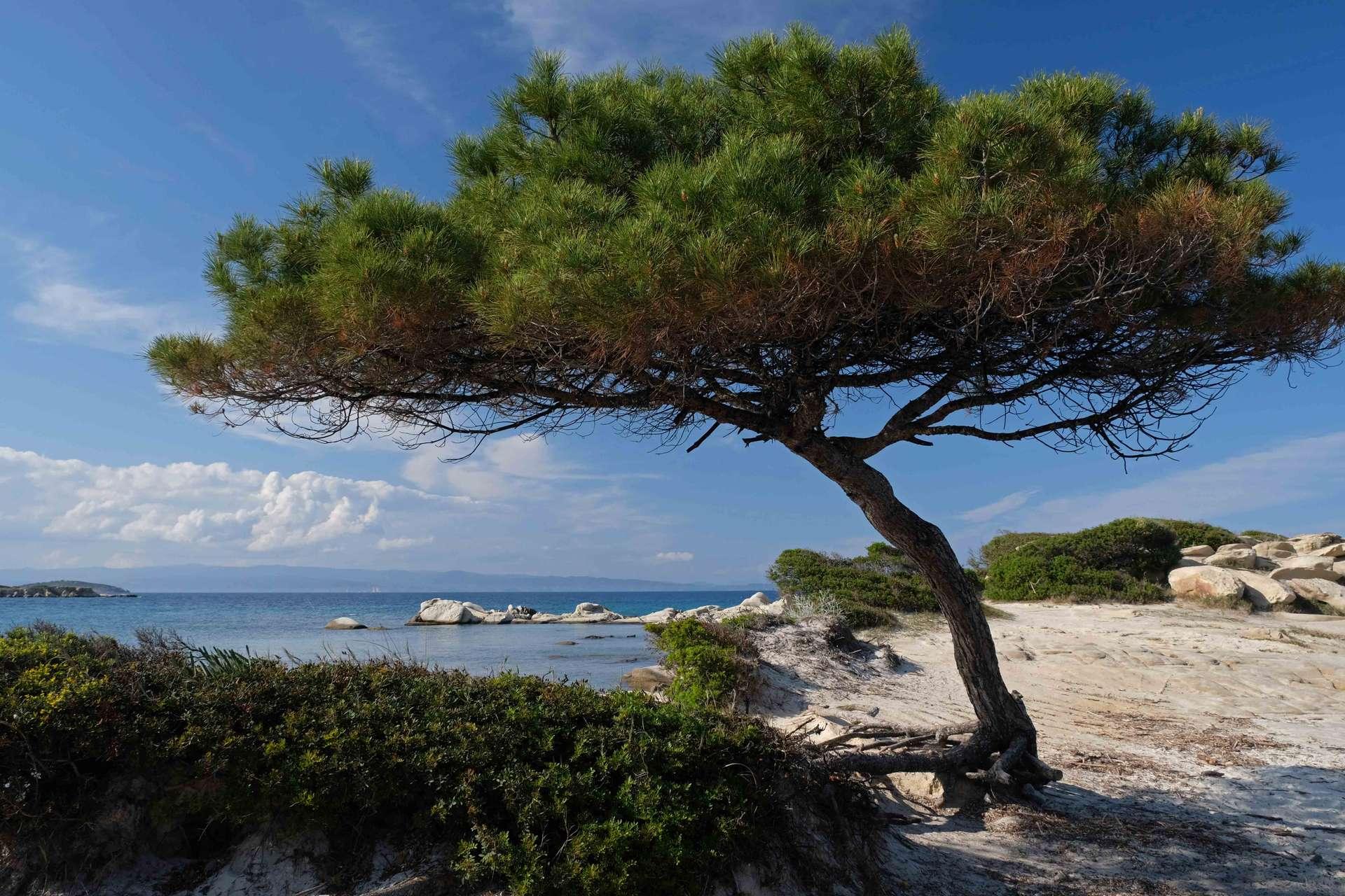 Chalkidki zee