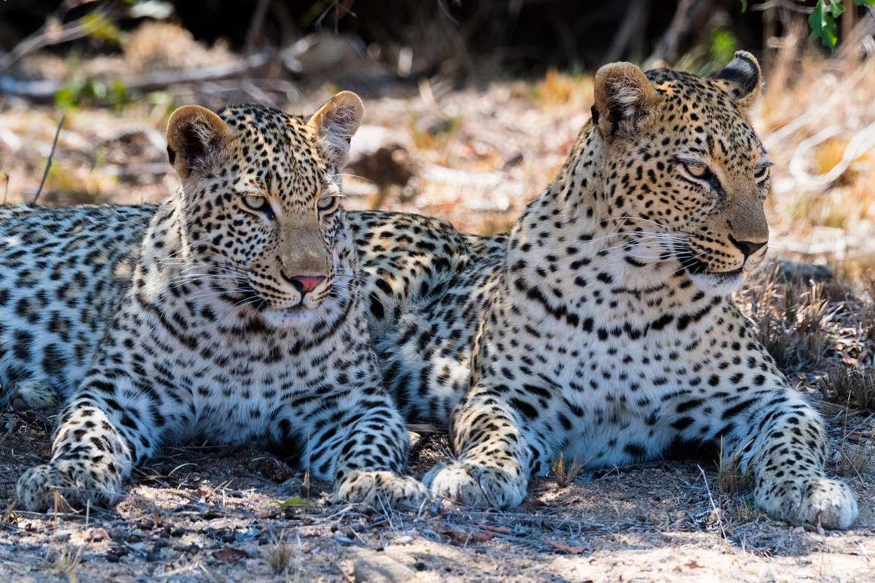 Zuid-Afrika - Kruger National Park
