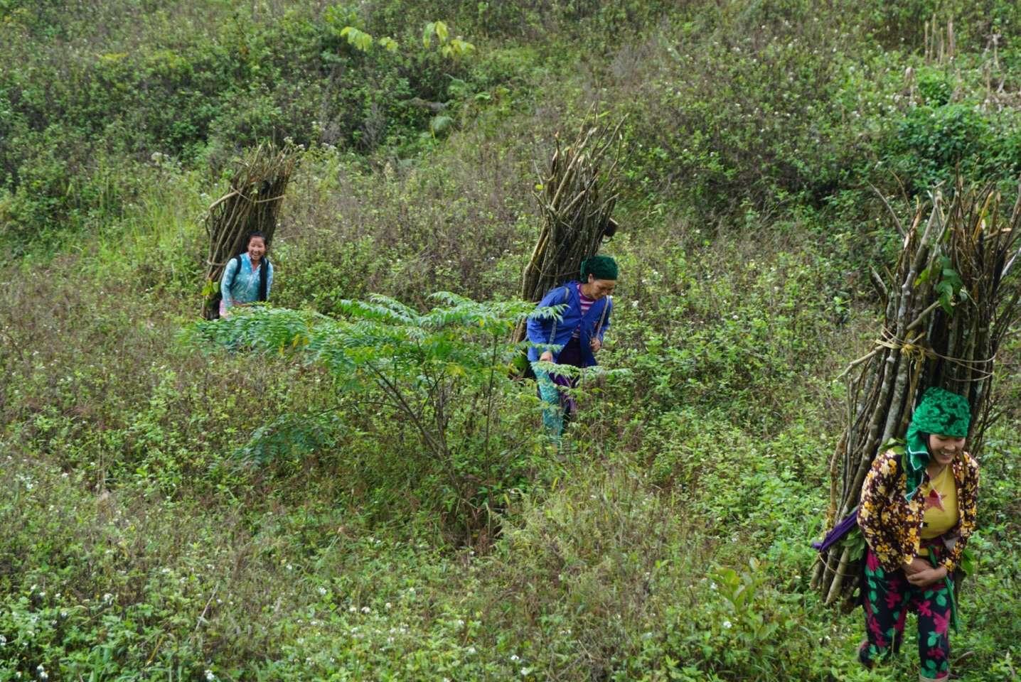 Noord Vietnam, groene valleien