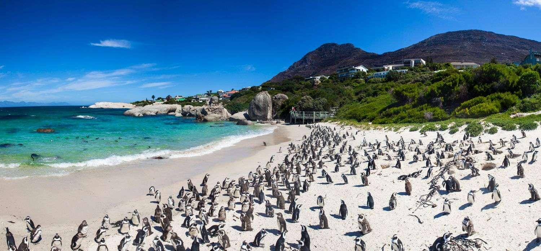 Boulder Beach Zuid-Afrika
