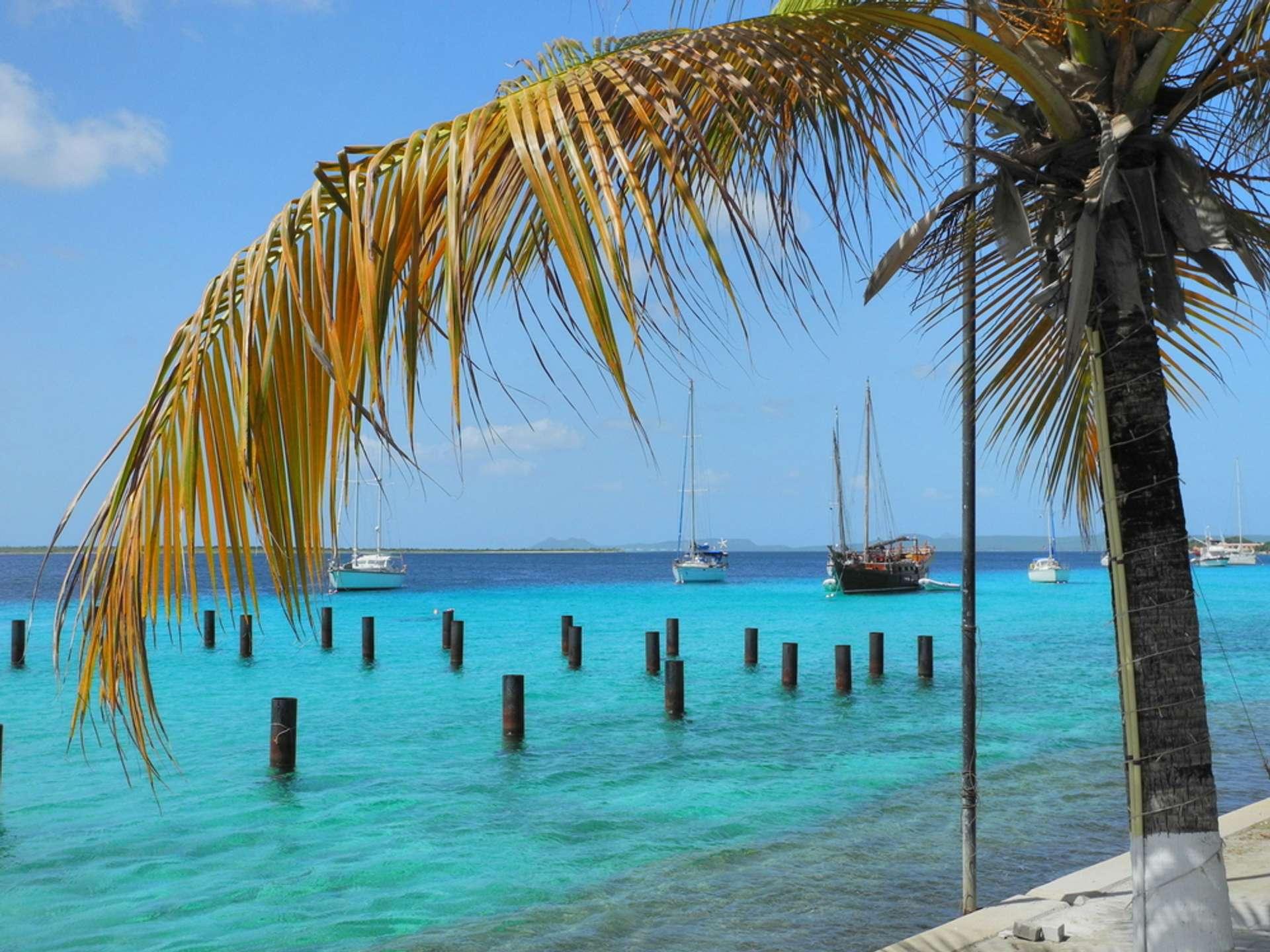 Bonaire blauwe zee palmboom