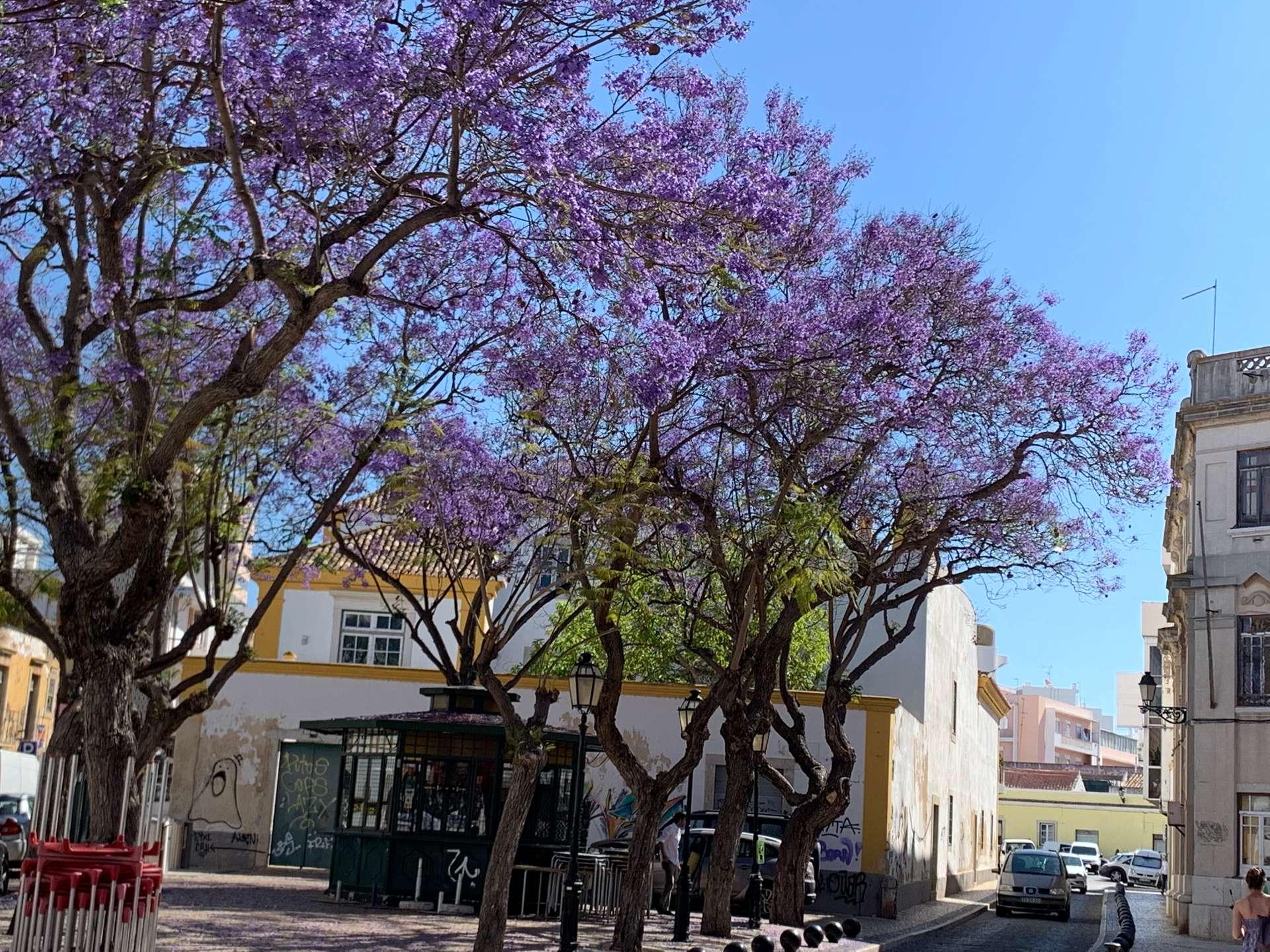 Portugal bomen