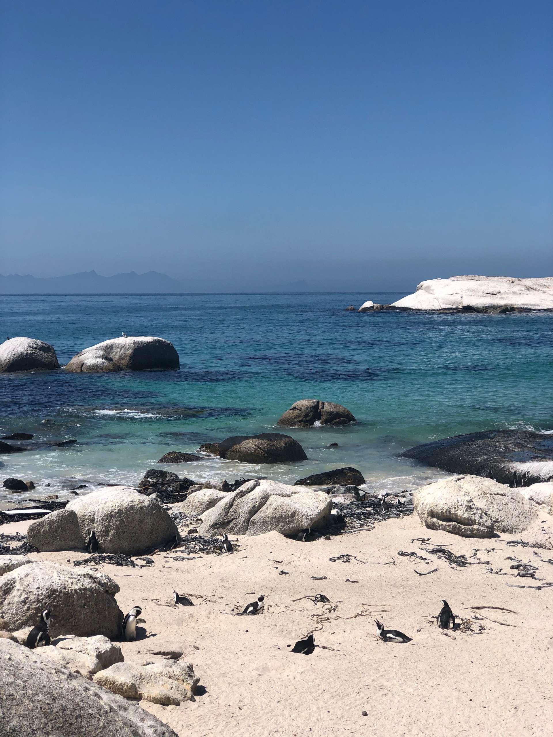 Zuid-Afrika, Kaapstad, pinguinstrand