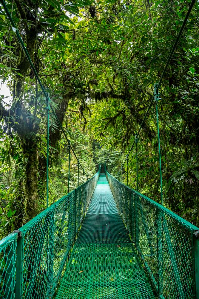 Costa Rica brug regenwoud