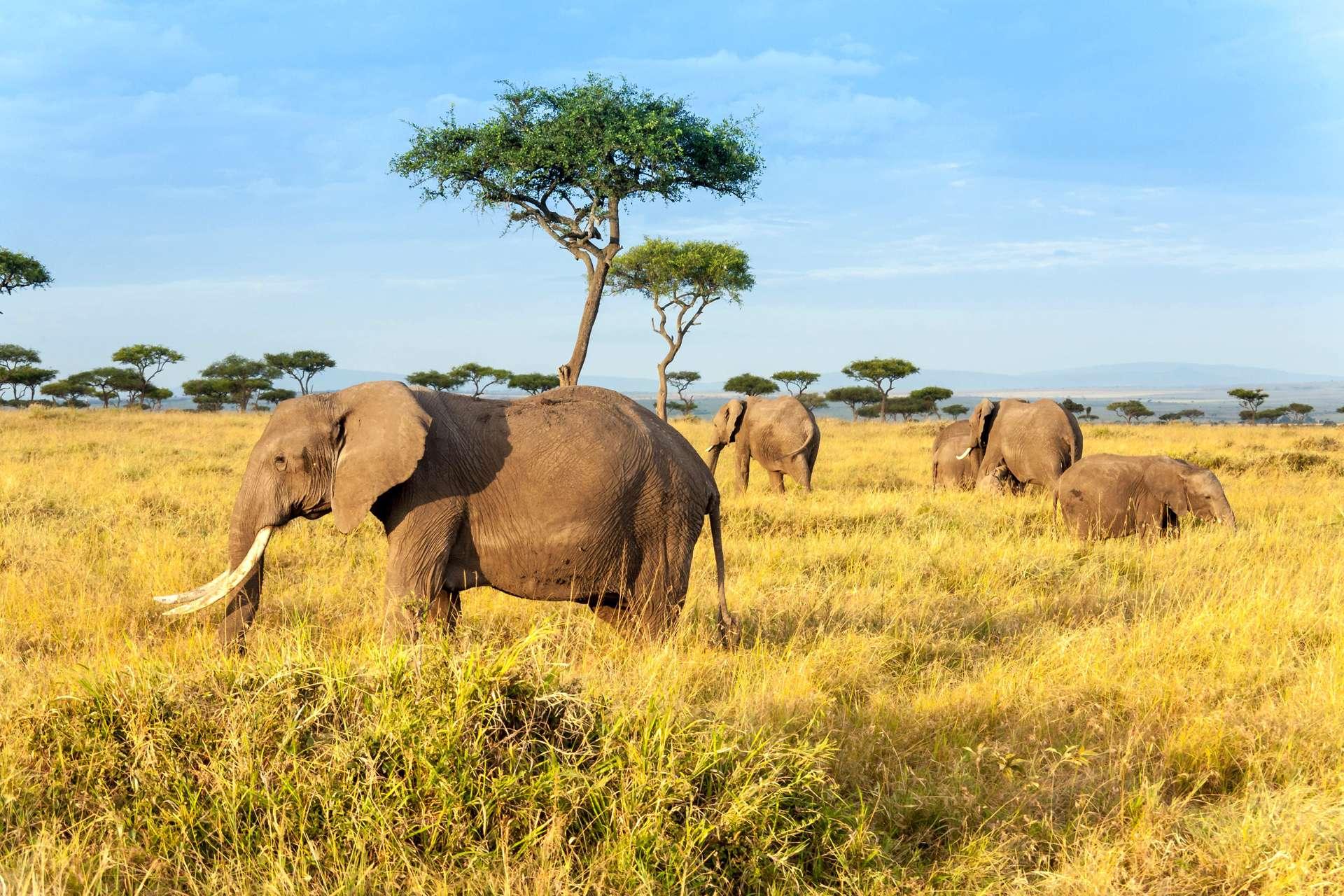 Kenia The Maasai Mara National Reserve olifanten