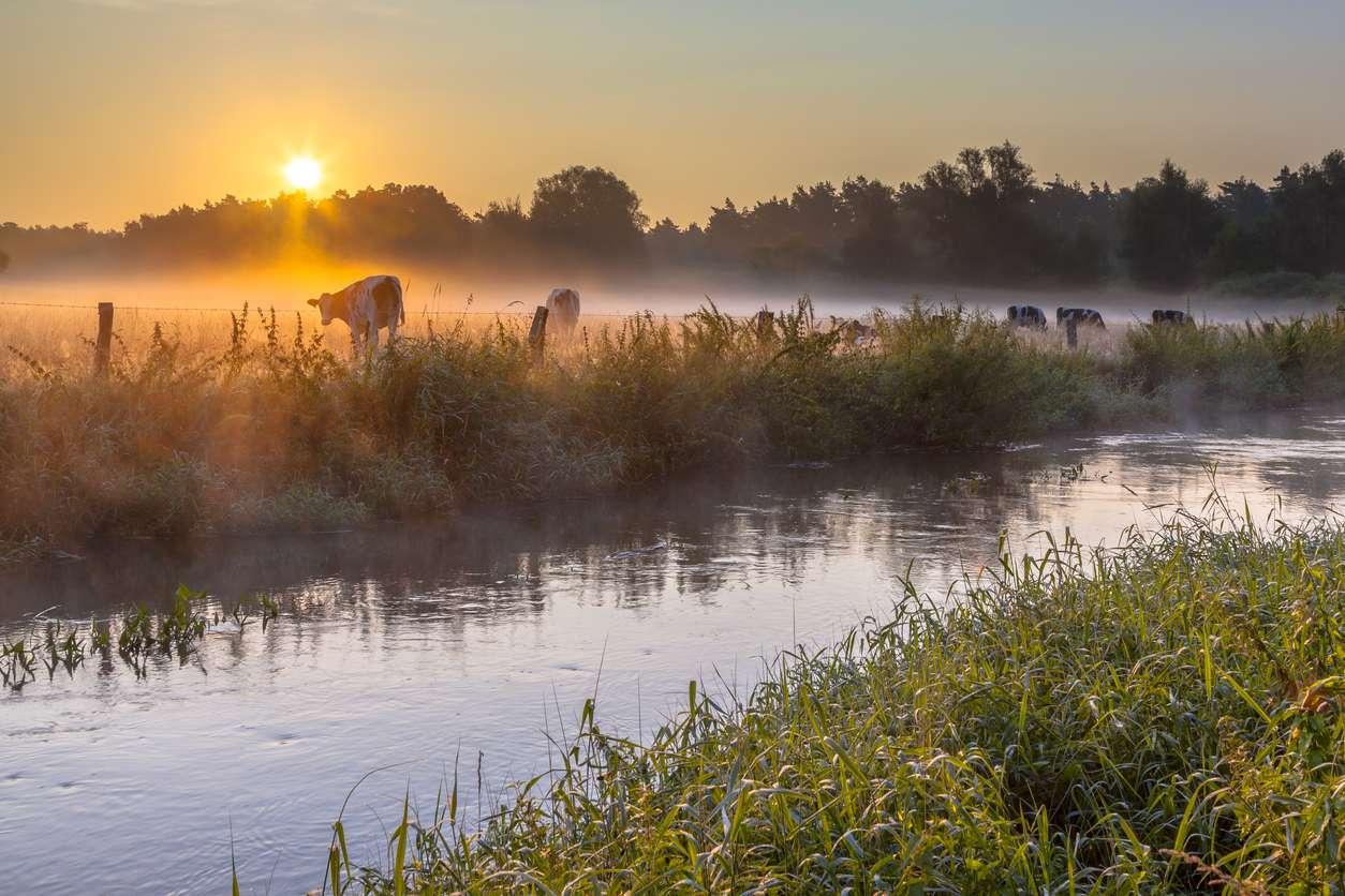 overijssel natuur koeien