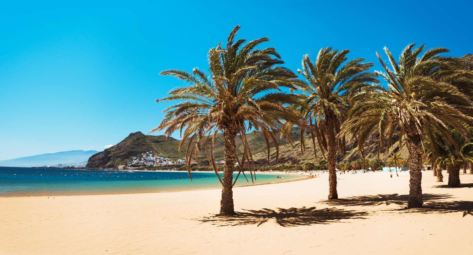 Spanje Canarische EIlanden Tenerife Palmbomen