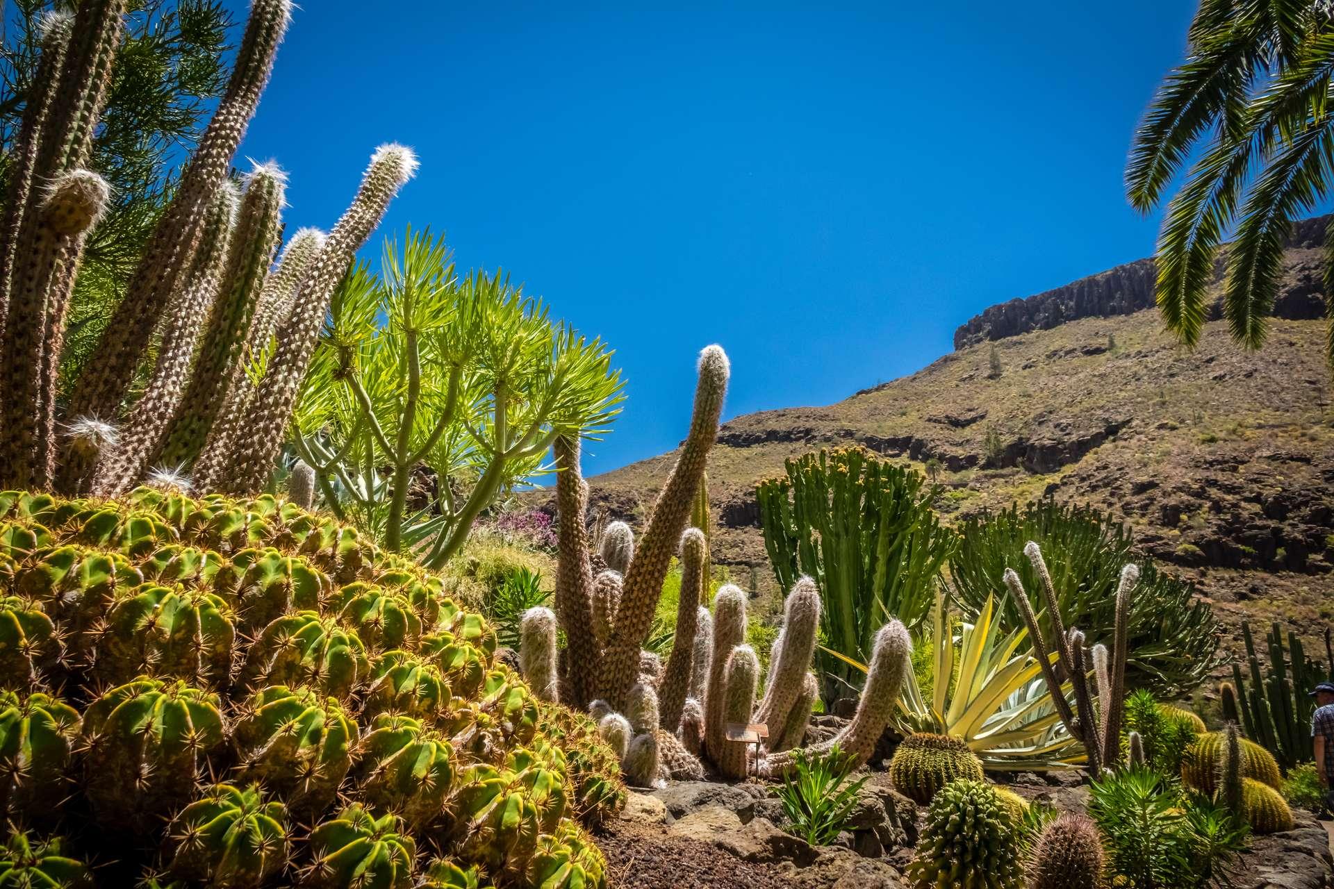 Spanje Canarische Eilanden Gran Canaria cactus garden