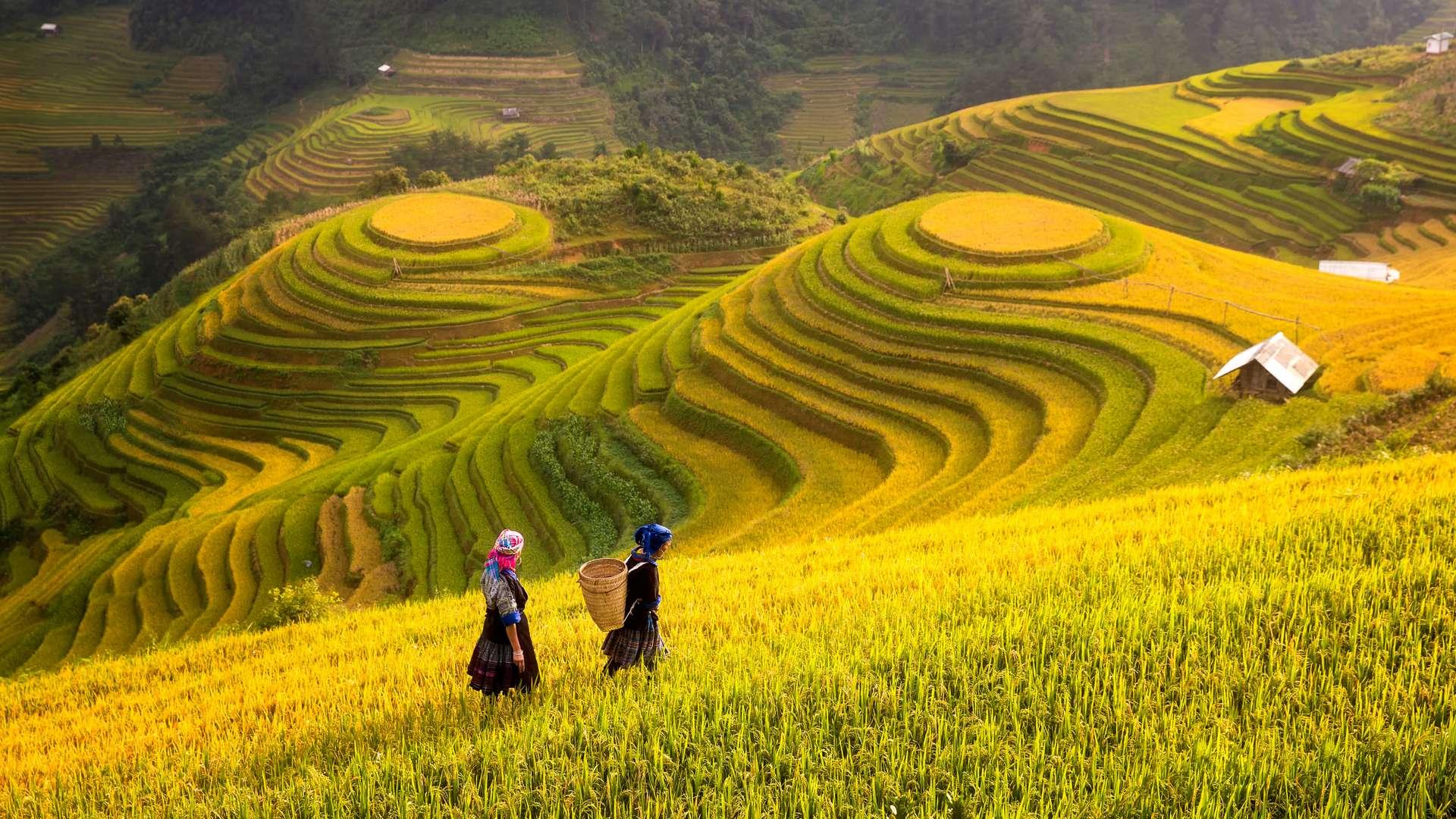 Vietnam YenBai Mu Cang Chai rijstvelden2