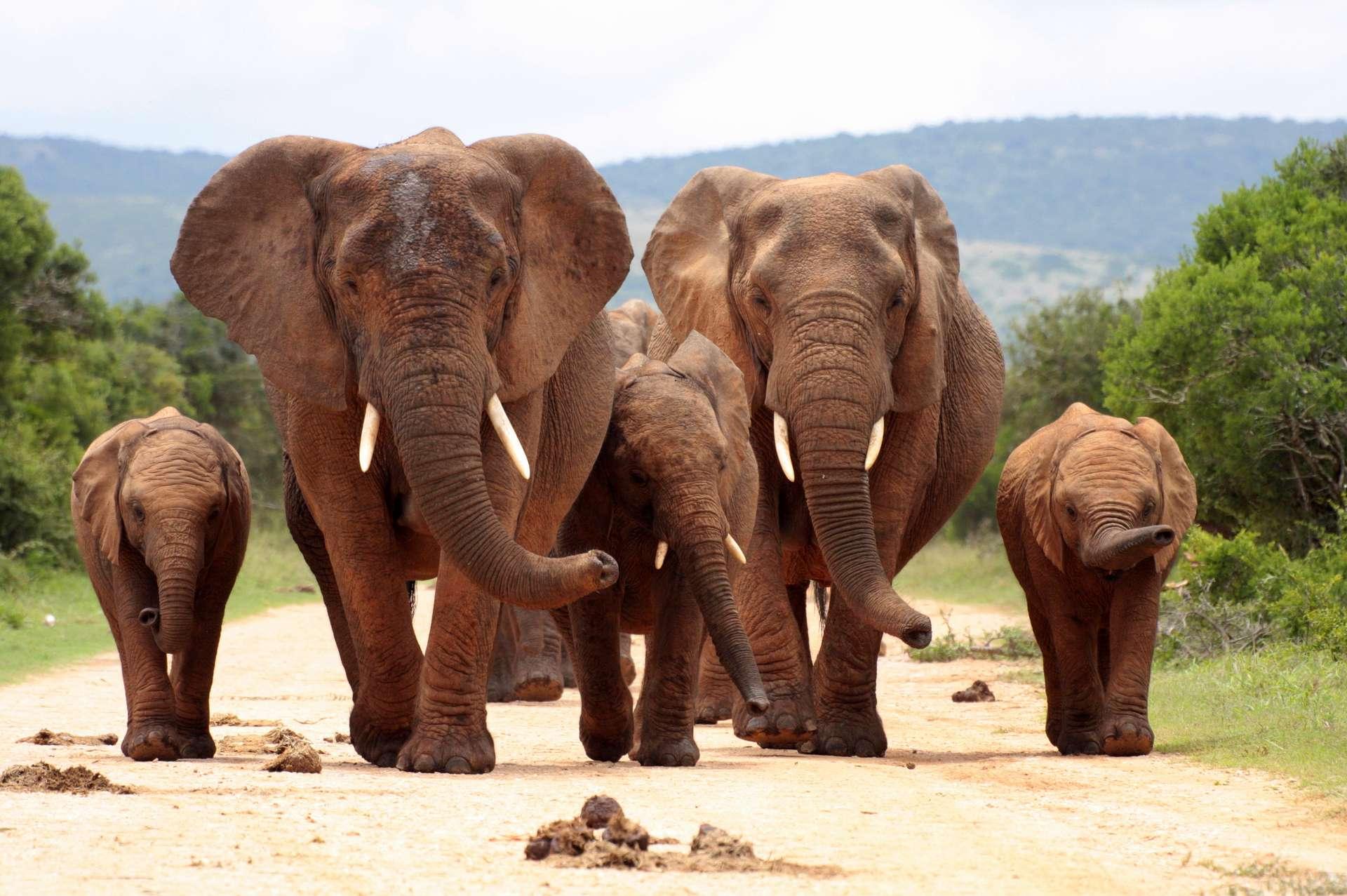 Zuid Afrika Addo Elephant National Park