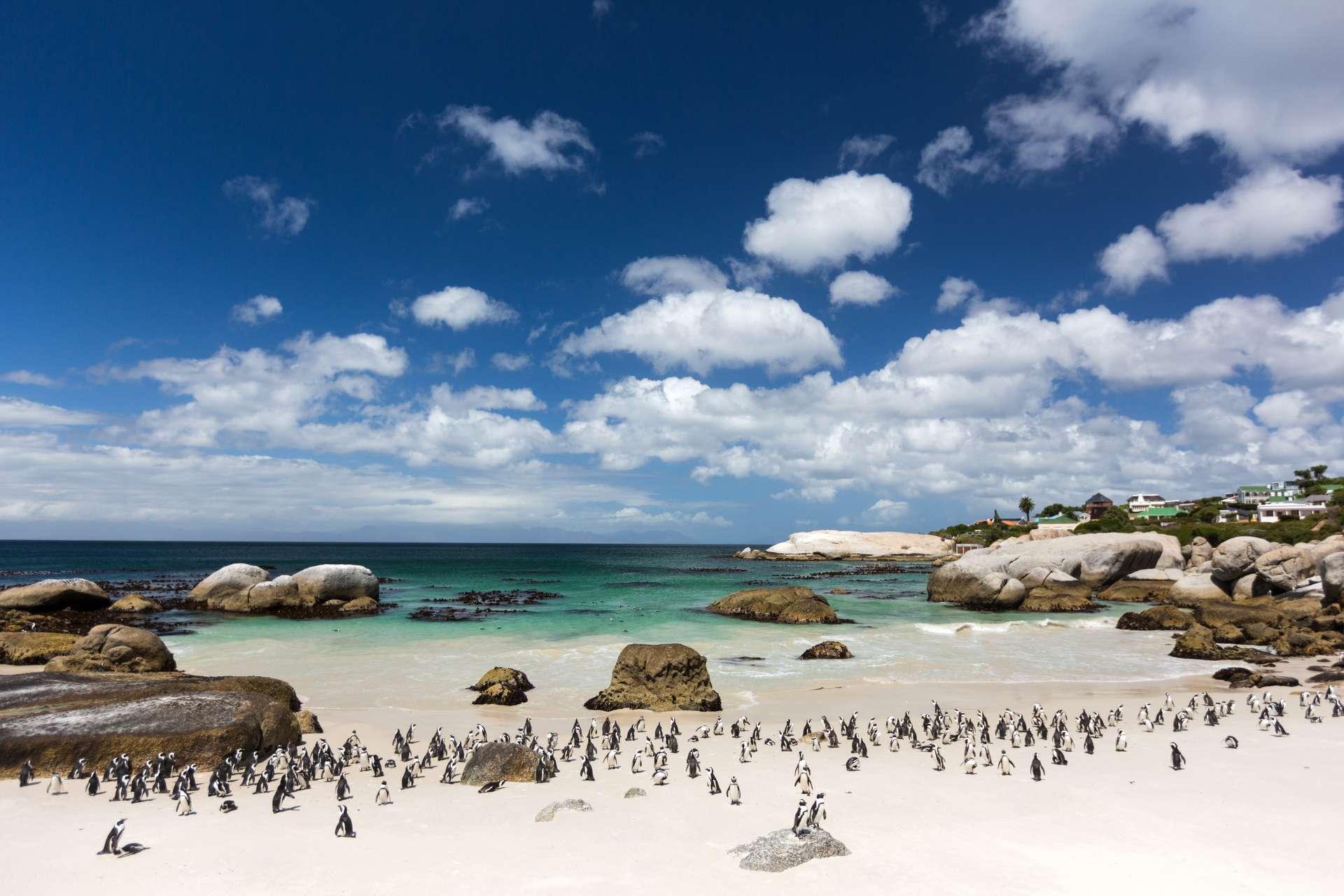 Zuid Afrika Kaapstad Boulders Beach penguins1
