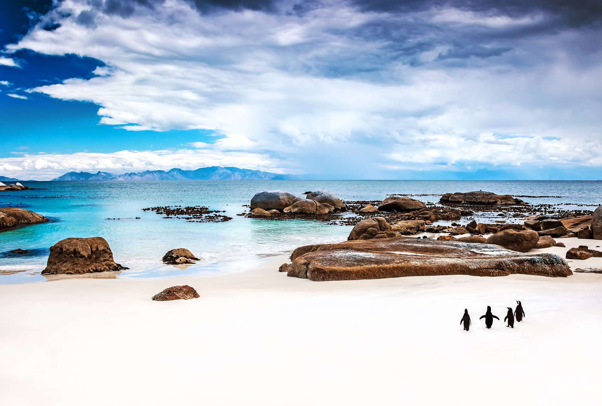 Zuid Afrika Simons Town Pinguins op strand