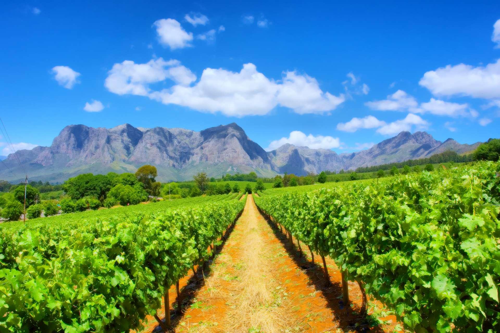 Zuid Afrika wijngaard in de buurt van Kaapstad